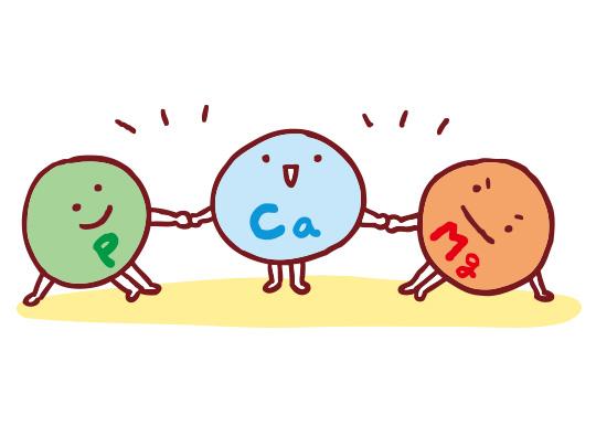 カルシウムはマグネシウムとリンとのバランスが重要。