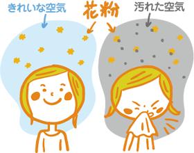 都心の汚れた空気と花粉が一緒になることでアレルギー反応がでます。